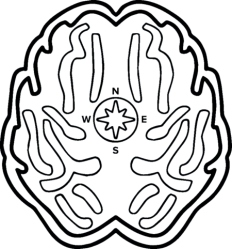 Prodigy Apparel, Logo, Brain, Compass